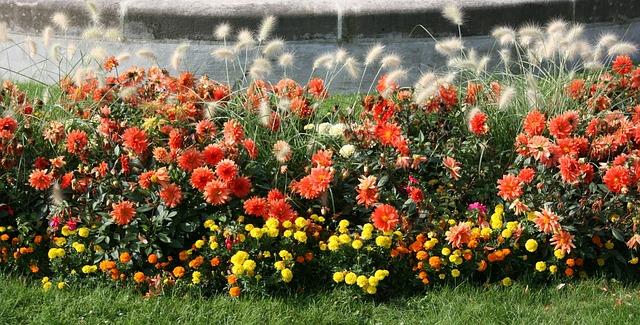 flowers-487135_640
