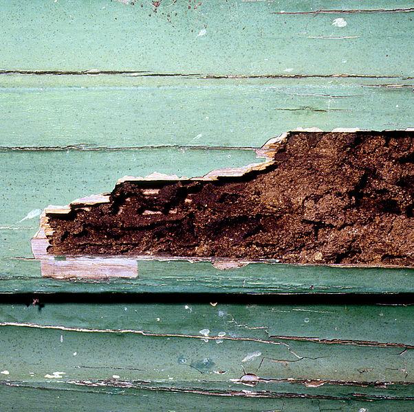CSIRO_ScienceImage_2185_Termite_Damaged_Weatherboard